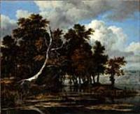 Дубы с озером с кувшинками